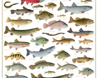 Fish poster etsy for Freshwater fishing ny