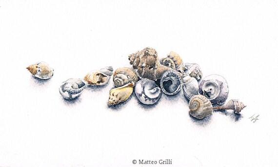 Still life with shells, Original Watercolour Painting, Sea life, Ocean, Gift Idea, Home Decoration, Interior Design
