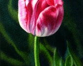 Pink Tulip Painting - Giclee Print of Original Watercolor by Arena Shawn - 5x7 Small Pink Flower Painting - Fine Art Romantic Gift