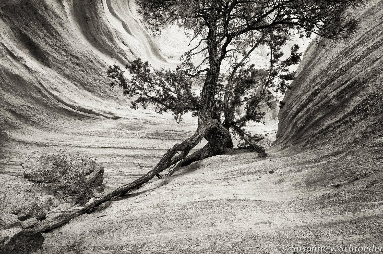 Nature Photography Prints Art Prints Nature Photo
