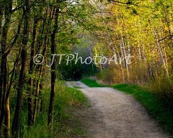 Dirt Road through the Trees at Dawn, 8x10 fine art print