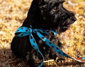 Sassy Lass - Scottish Terrier Greeting Card - fine art photograph