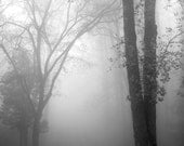 black and white photography, tree photography, landscape, nature, trees, tree photography, foggy landscape, November Fog