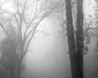black and white photography, tree photography, landscape photography, nature, trees, fog photography, foggy landscape, November Fog