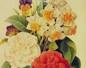 Camellia Narcissus Viola Bouquet By Redoute Vintage Wild Flowers Lithograph Poster Print To Frame 1