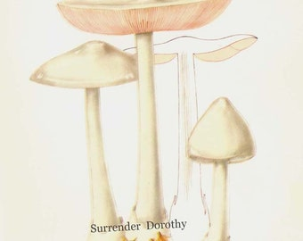 Dunghill Agaric Mushroom Volvariella Speciosa Edible Mycology Chart Food Botanical Lithograph Illustration For Your Vintage Kitchen 20