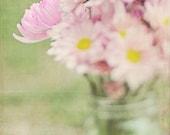 Fine Art Phtography, Pink Daisy Flower Bouquet Photo 8x8 Print
