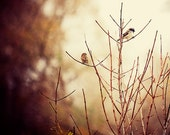 Two Birds in a Tree, Wildlife Photography, Decorative Nature Photo, Warm Tones, Fog, Mist, Branches, Brown