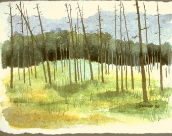 Cook Forest original water color