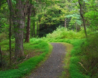 Woodland Decor Path in the Forest of Tall Trees Woods Trail Hiking Ferns Photographic Collection