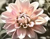Nature Photography - Bedroom Photo, Flower Photo, Dahlia Photo, Pink Bedroom decor, pink wall art