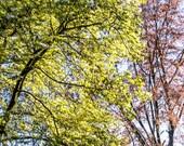 Photography  seasons  SPRING GREENS 6 //  photograph / backyard / garden / trees