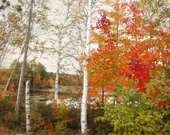 Fall Colors photo New Hampshire Wall Art Aspens Red Gold Orange Green Decor Rustic Landscape Print Nature Home Decor 5x7, 8x10, Matted