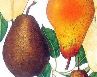 Pears Fruit Print Vintage Cookbook Color Book Page Plate 1991 No 2