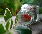 BEACH IN A BOTTLE...a glass bottle filled with beach treasures, sea glass, shells and stones