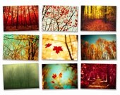 Autumn photography fall forest autumn leaves ruby red harvest gold burnt orange tree photo nature prints - 9 5x7 prints