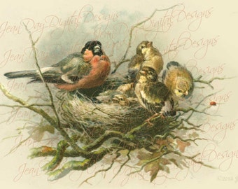 Robin's Nest & 5 Baby Birds 1903 antique Instant Digital French postcard  FrA166