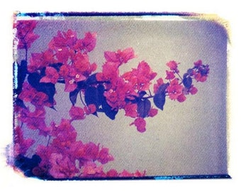 Photography Polaroid Red Flowers Fine Art 4x5 Print