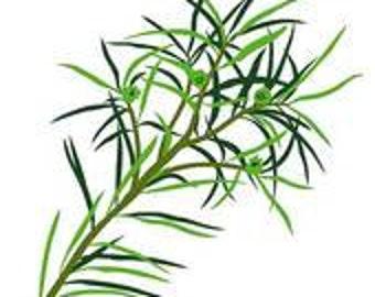Tea Tree Essential Oil Premium Australian