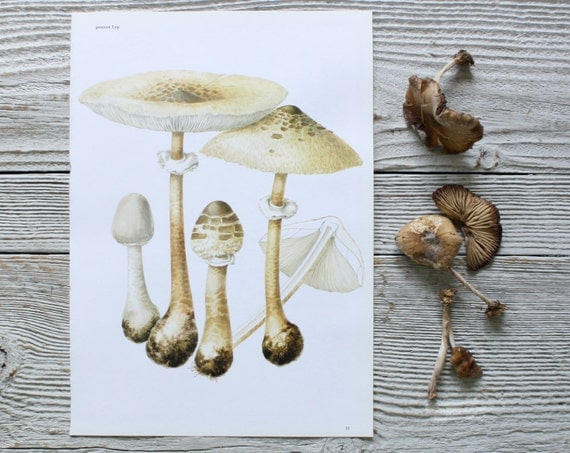 Vintage Mushroom Print - 1960