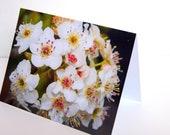 SALE - Spring Flowering Bradford Pear - BLANK 4x6 Photo NoteCard