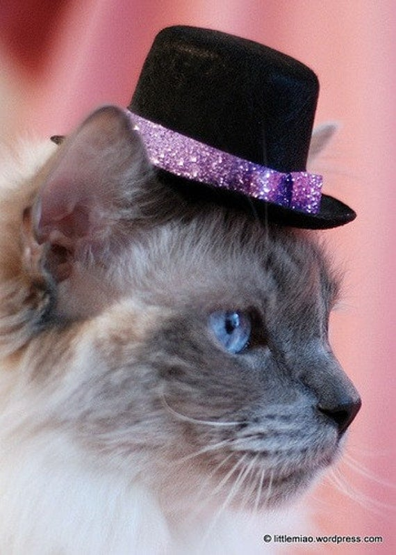 Valentine's Cat Hat - Glitz and Glam Hat for Small Pets - Mother's Day Hat - Celebrate Spring Top Hat  - Cat Top Hat - Cat Accessory