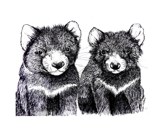 Tasmanian Devil  Original pen and ink  By Cindy Watkins print on card. Blank Gift Card with envelope.