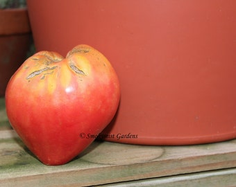 Heirloom Pink Tomato Seeds Oxheart - 20 seeds