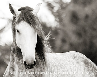 Horse Photography, Horse Photo, black and white horse photography, fine art equine photography