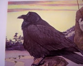Raven Bird print, 1936 Vintage illustration by Fuertes CLEARANCE