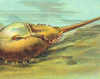 1932 Vintage Spanish Sheet of Illustrations on Descendants of Prehistoric Animals. Sheet 38