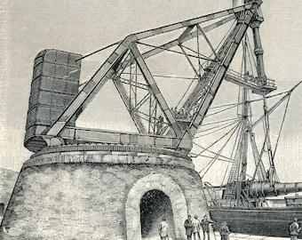1895 German Antique Engraving of Cranes (Larger Version)