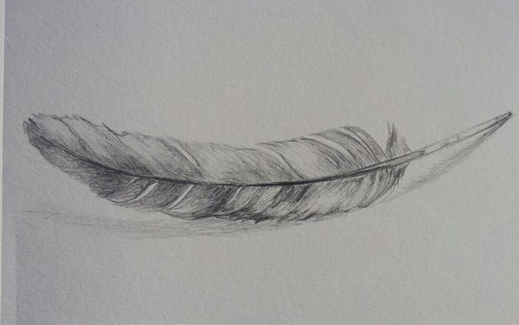 Pencil Drawings Of Eagle Feathers Original feather drawing - pencil    Eagle Feather Pencil Drawing