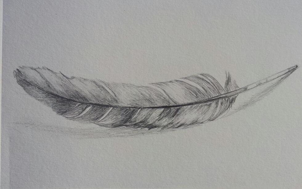 Original Feather Drawing Pencil Sketch