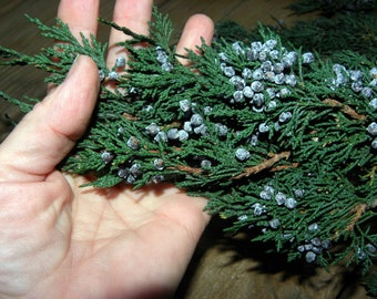 Blueberry Juniper Branches Preserved-Christmas tree boughs-Aromatic juniper-Make a swag or Wreath 16 Oz Bunch