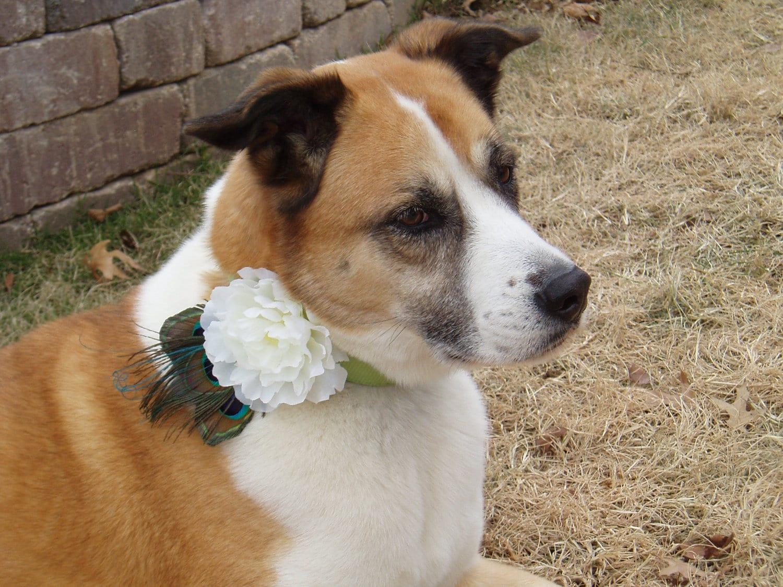 Dog Flower Collar Wedding Dog Flower Collar Attachment