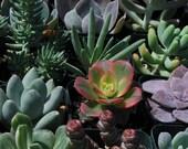 105 Wedding Favor Centerpieces Decorations Succulent Plants Flowers Gifts Bouquets