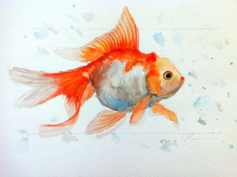 Orange red goldfish tropical aquarium original watercolor for How to paint a portrait in watercolor