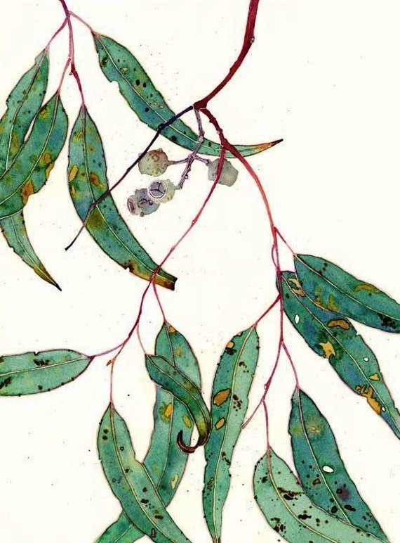 Items Similar To Gum Leaves: Watercolour, Blank C6