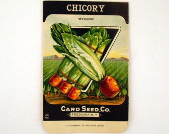 Vintage 1920s Unused Paper Seed Packet Chicory