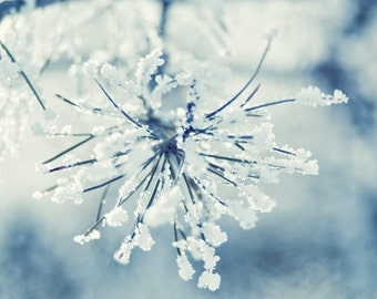 Frosty - 5 x 5 Fine Art Photograph - blue white ice snow covered branches forest pine woods winter