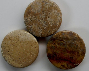 Fossil Coral Beads 2 Stone Beads Similar to Petoskey Stone