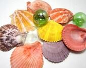 Beach Decor Scallop Shells - Nautical Decor Seashells - Beach Wedding Shells - Craft Shells - Coastal Decor - Beach House Decor 6pc Colors