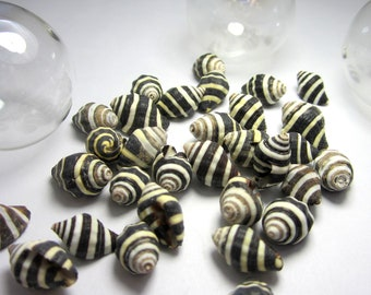 Shells for Beach Decor - Nautical Decor Beehive Shells, Black & White Striped, 12pc