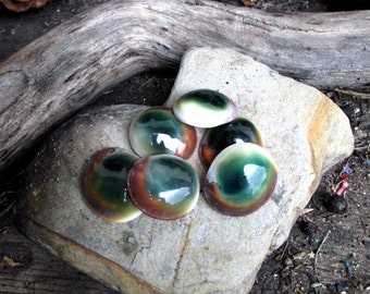 Rita's Cat's Eye Ritual Shells - Shiva's Eye - Ward off Evil Eye, Protection, Insight, Psychic Intuition