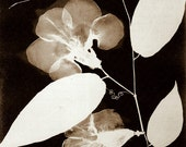 """Antique Botanical Print """"Leaf and Curl"""" Black and White Silhouette Photogenic Drawing - Dark Floral Print Woodland Forest"""