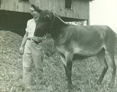 Donkey on a Summer Day With Farmer Standing in Front of Barn Vintage Photograph Picture Snapshot