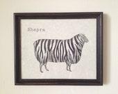 Shepra Print 8 x 10