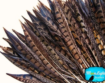 """Tail Feathers, 10 pieces - 12-14"""" NATURAL Lady Amherst Pheasant Tail Feathers : 2275"""