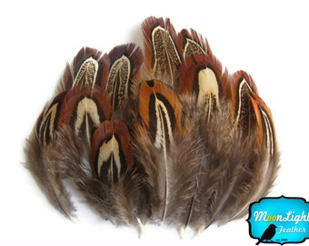 Brown Feathers, 100 Pieces - NATURAL ALMOND Ringneck Pheasant Plumage Feathers 0.10 oz.: 300